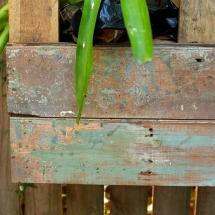 plants small 3